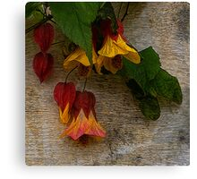 Mission Flowers Canvas Print