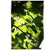 Garden Detail- Wychwood Garden, Mole Creek, Tasmania Poster