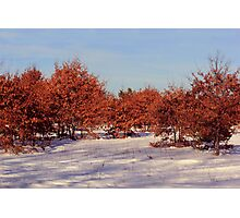 Winter Red Photographic Print