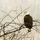 Eagle, Nisqually Basin by Cindy-Lou Holland