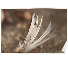 Beach feather... Poster