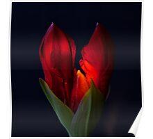 My Happy Amaryllis  Poster