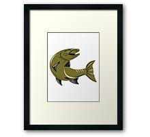 Muskie Muskellunge Fish Retro  Framed Print