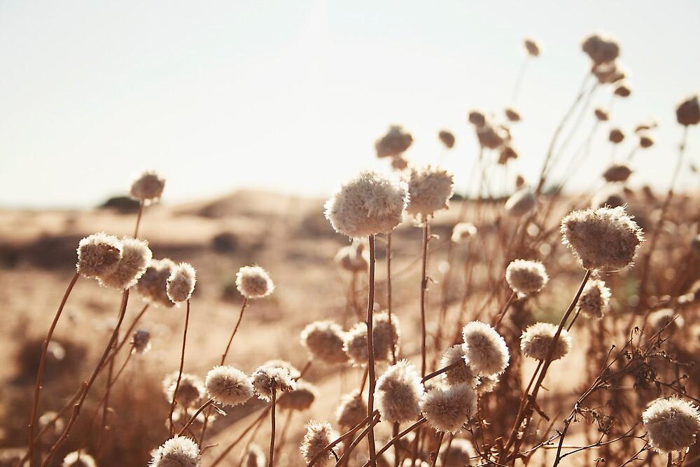paper flowers by Belinda Fraser