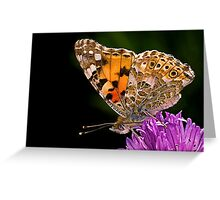 Butterfly - Vanessa Cardui Greeting Card