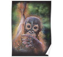 No Tree, No Me (Baby orangutan) Poster