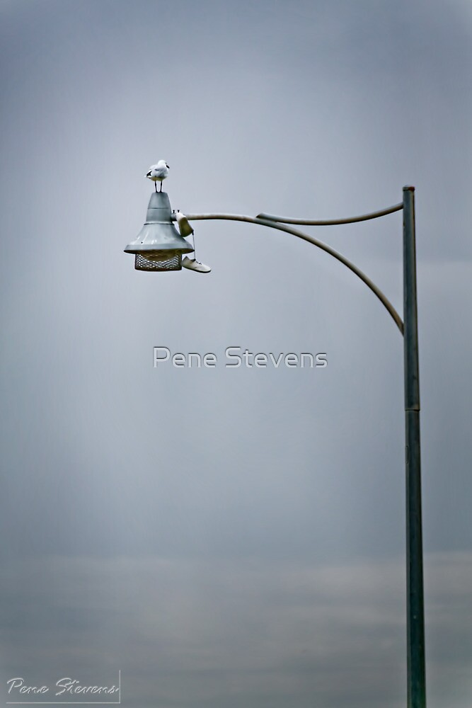 Up a Pole by Pene Stevens