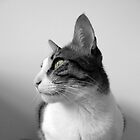 Peaceful Cat by silvianeto
