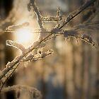 Frosty snow by Henry Moilanen