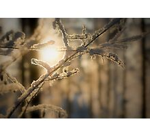 Frosty snow Photographic Print