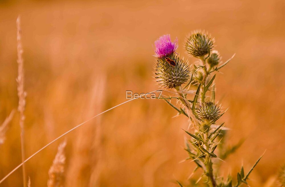 wild things by Becca7