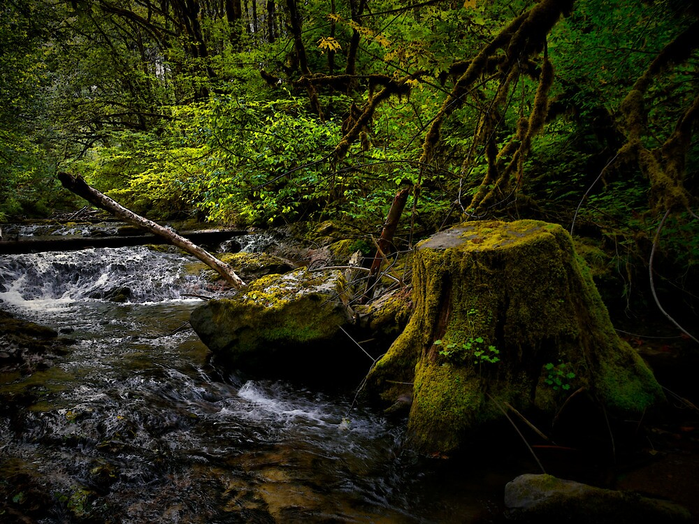 In The Shade by Charles & Patricia   Harkins ~ Picture Oregon