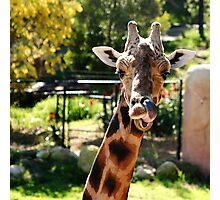 Baringo Giraffe Photographic Print