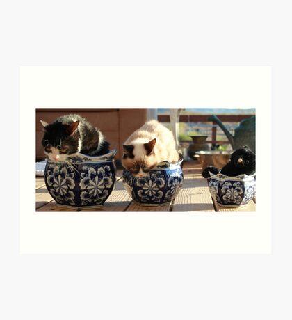 Potted Grump - Grumpy Cat and Pokey Art Print