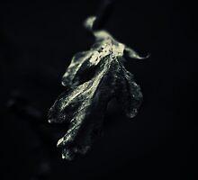Alone in the dark..II by Bob Daalder