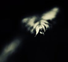 Alone in the dark..III by Bob Daalder