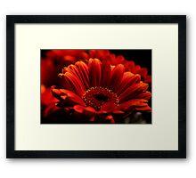 Red Delight Framed Print