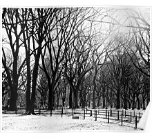 Central Park trees Poster