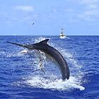Marlin Canvas or Print - Giant Black Marlin Head Shake by blackmarlinblog