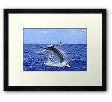 Marlin Canvas or Print - Giant Black Marlin Head Shake Framed Print