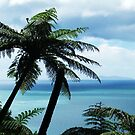Manunganui Palm by jlv-