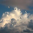 EGRETS IN FLIGHT by TomBaumker