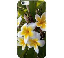 Frangipani Blossoms iPhone Case/Skin