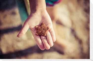 Biscuit Sea Star by Melissa Drummond