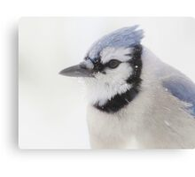 Snowy Blue Jay Canvas Print