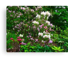 Lively blossoms Canvas Print