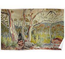 Charred tree, Dutchmans Stern NP, Flinders Ranges Poster
