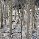 Winter Aspens by Brendon Perkins