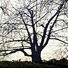 Tree Shadow © by Ethna Gillespie