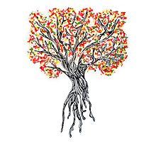 Sprinke Tree Photographic Print