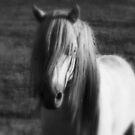 my little pony by lilli robertson