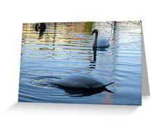 """DUCK"" said the Swan! Greeting Card"