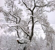 Winter Tree by Manverie