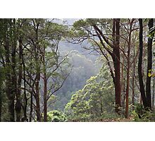 Australian Bush, Tallebudgera Valley, SE QLD. Photographic Print