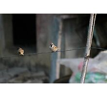 Birds in the clothes line Photographic Print