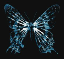 fringe butterfly by nefos