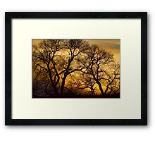 Dancing Trees Golden Sunset Framed Print