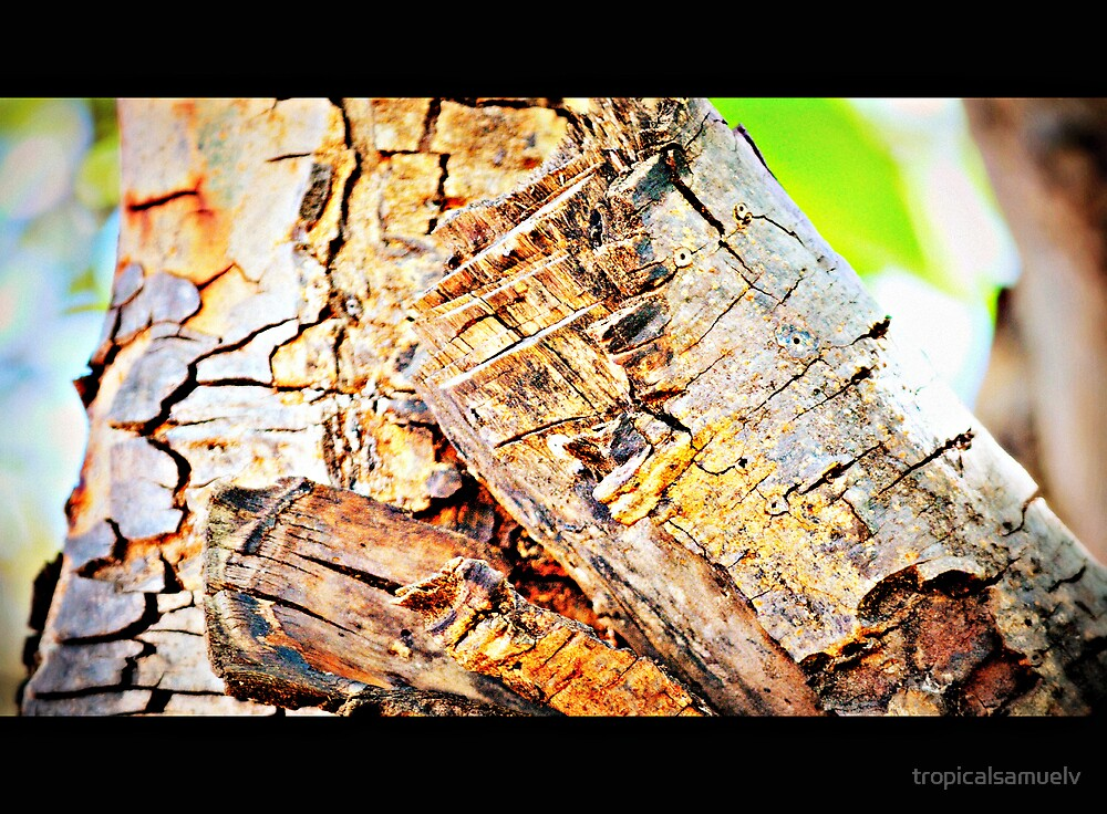 Tree Trunk by tropicalsamuelv