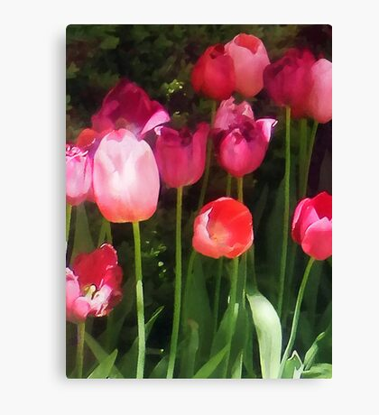Pink Tulips in Garden Canvas Print