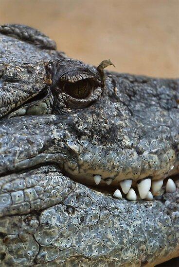 Crocodile by Vac1