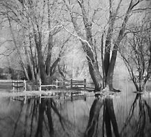 Bare Trees Reflected In Flood Water by Andy Stafford
