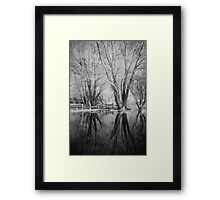 Bare Trees Reflected In Flood Water Framed Print