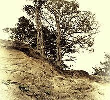 Vintage photo of pine on a precipice by Sozh