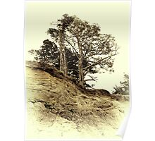 Vintage photo of pine on a precipice Poster
