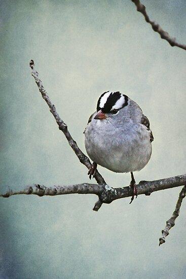 White Crowned Sparrow ~ by Renee Blake
