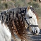 White Spanish horse in Almeria by Alan Gandy